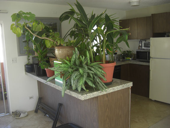 plants-on-counter.jpg